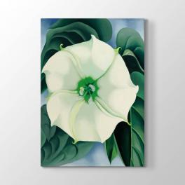 Georgia O Keeffe - Boru Çiçeği Tablosu