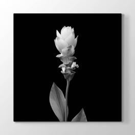 Siyah Beyaz Açmamış Çiçek Tablosu