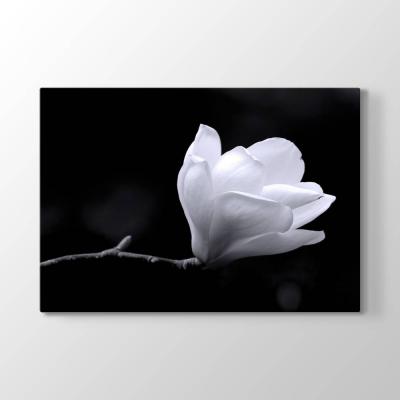 Manolya Çiçeği Tablosu