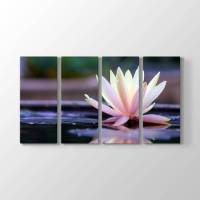 Nilüfer Çiçeği Panorama Tablosu