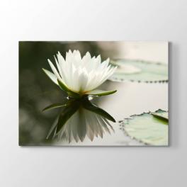 Beyaz Lotus Çiçeği Tablosu