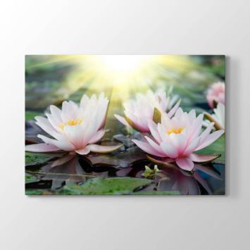 Nilüfer Çiçeği ve Gün Işığı Tablosu