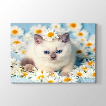 Mavi Gözlü Yavru Kedi Tablosu